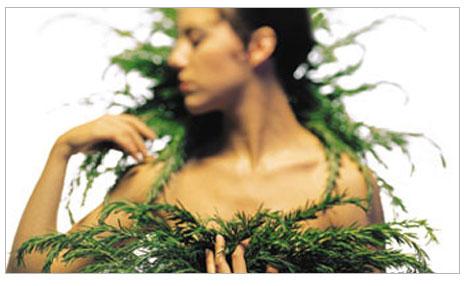 Bitkilerden mucize topla