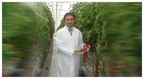Suda domates üretti, verimde dünya rekoru kırdı