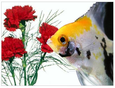 Balıkları Bayıltmada Organik Bir Ürün: Karanfil