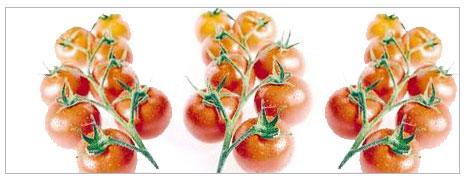 Nitratlı domatesleri kim yiyor?