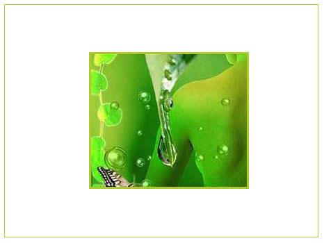 Bitkilerle Gelen Sağlık