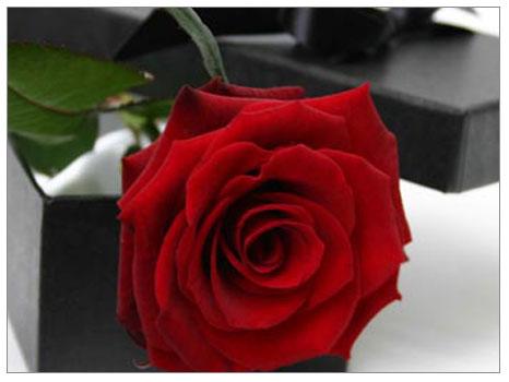Çiçekler mezatta, sevgililer sırada!