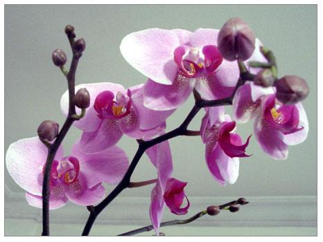 Bir çiçek bulutunda saksılar