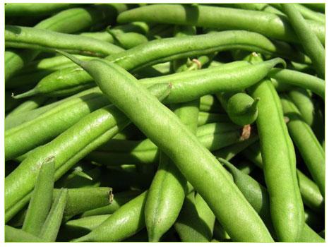 Fasulye (Phaseouls vulgaris)