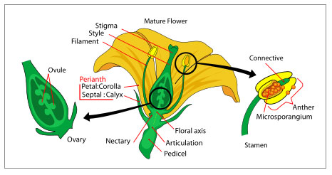 Çiçek (Botanik)