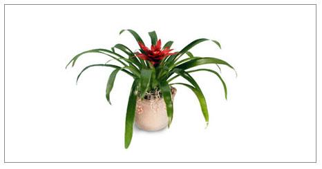 Salon Bitkilerinin Bakımı