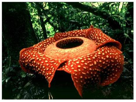 Çeşitli ve ilginç bitkiler hakkında bilgiler çeşitleri
