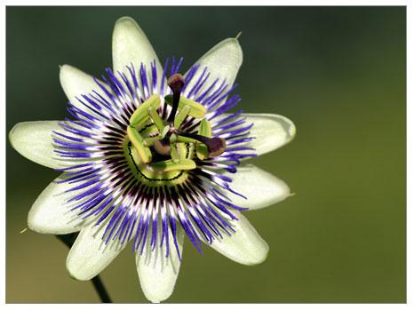 Çiçekler Hakkında İlginç Bilgiler