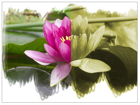 Çiçek Hastalıkları