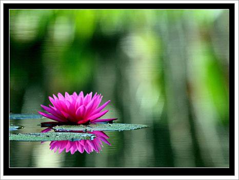 http://sifalibitkiler.sitesi.web.tr/bitkiler/cicek_23122007125907.jpg