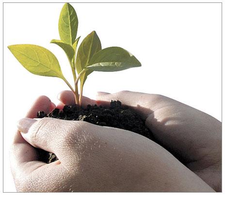 Bitkisel Üretimde  Organik Tarım