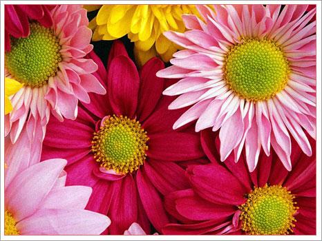 Renklere Göre Çiçeklerin Dili