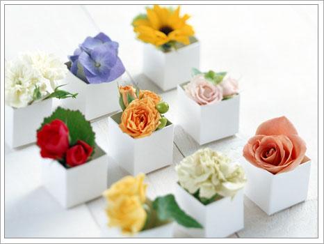 Bu çiçekleri sizde yetiştirebilirsiniz
